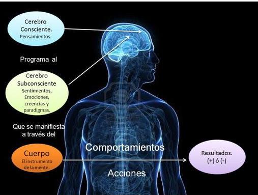 esquema-cerebro-1